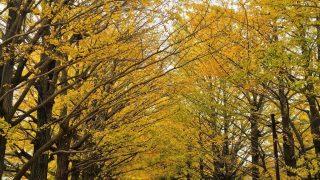 LLP20 11/17.18@NHKホール